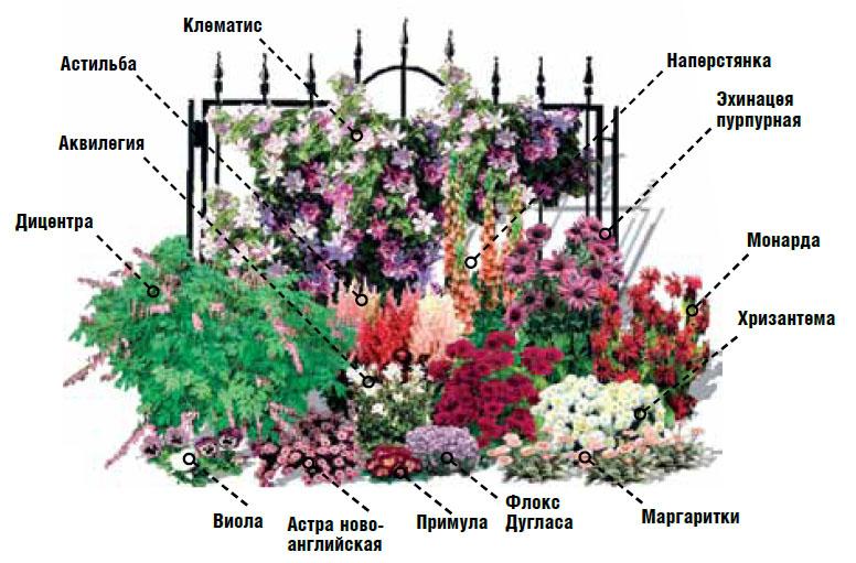 Схема цветники и клумбы своими руками на даче фото цветущее всё лето