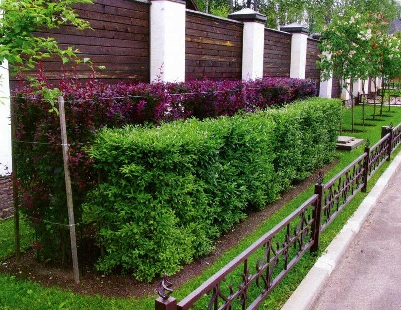Какие деревья нельзя сажать на участке приметы для садоводов