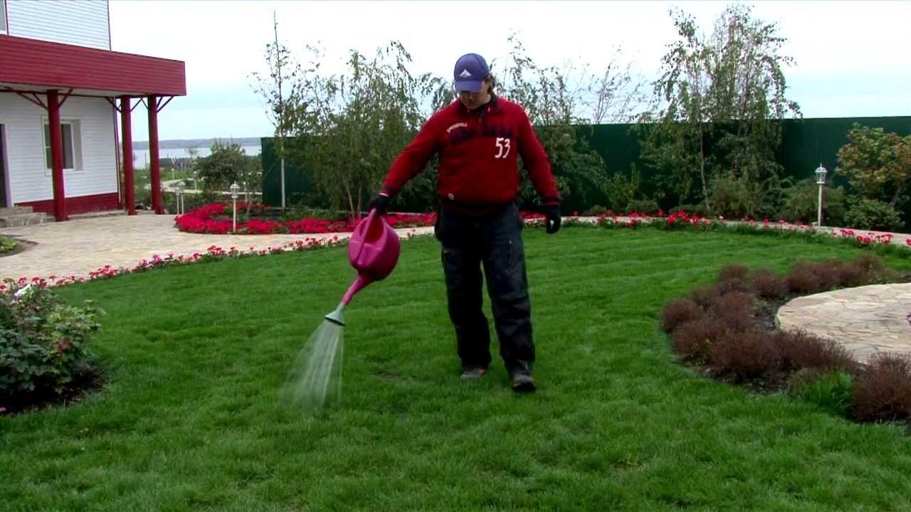 Как правильно поливать газонную траву