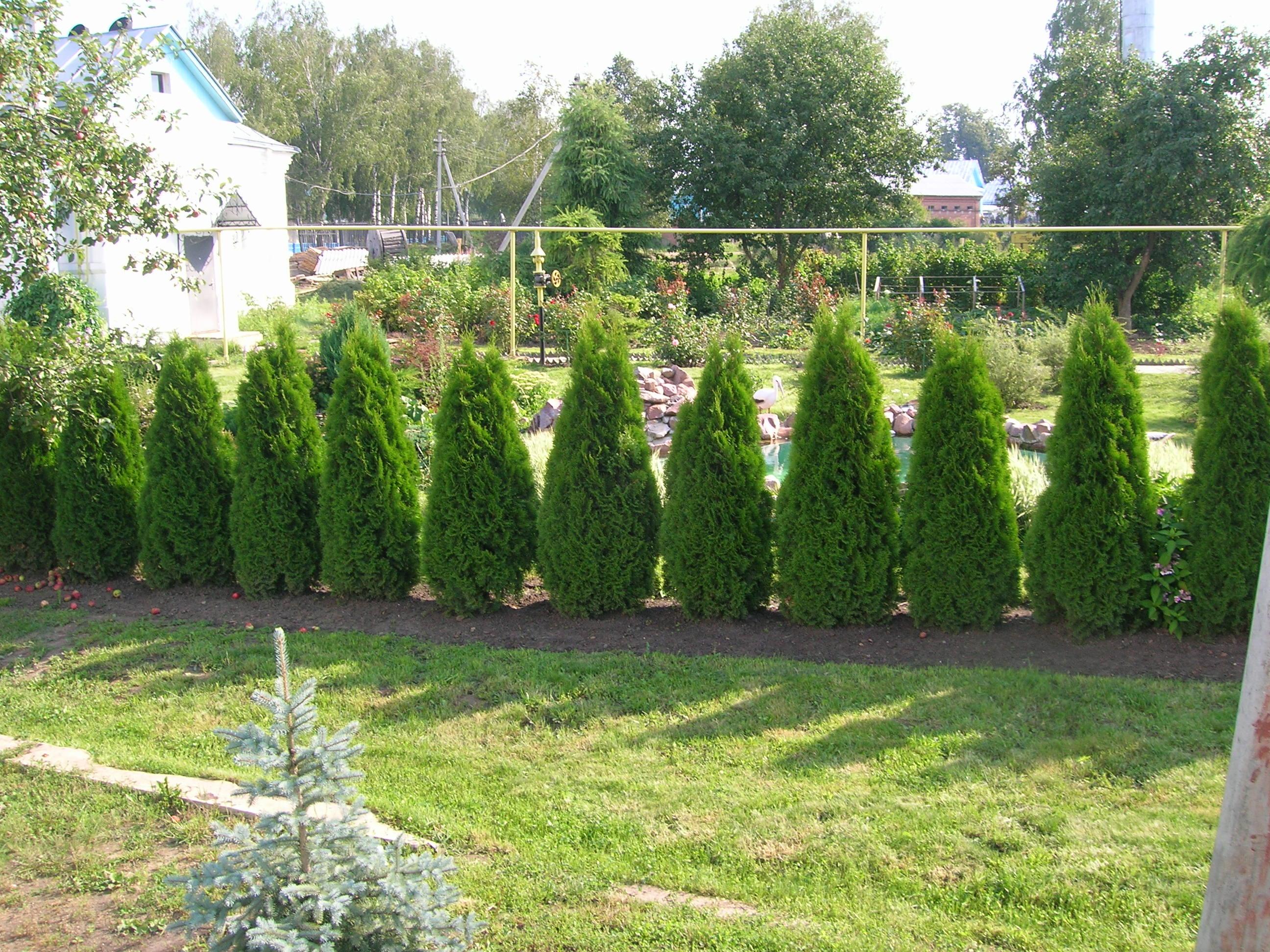 Зеленый забор дизайн фото