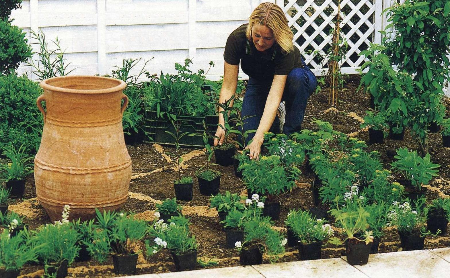 Что сажать осенью на даче: 7 советов огородникам (38 фото) 11