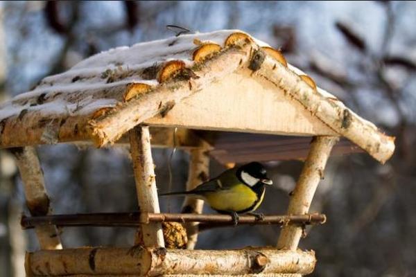 столовых для птиц: