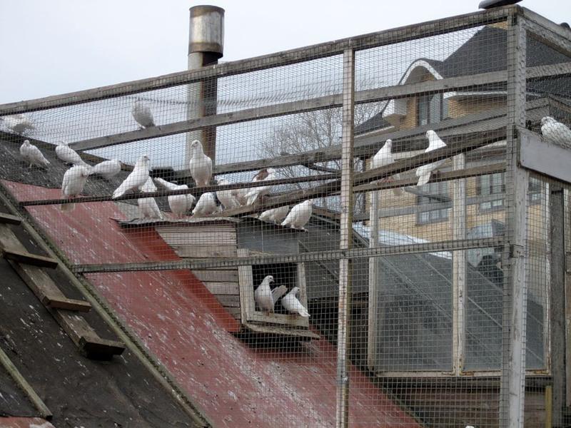 Купить готовую голубятню в москве