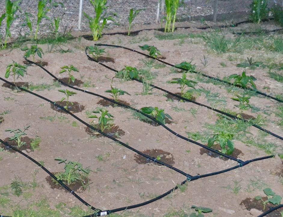 Капельное орошение в огороде