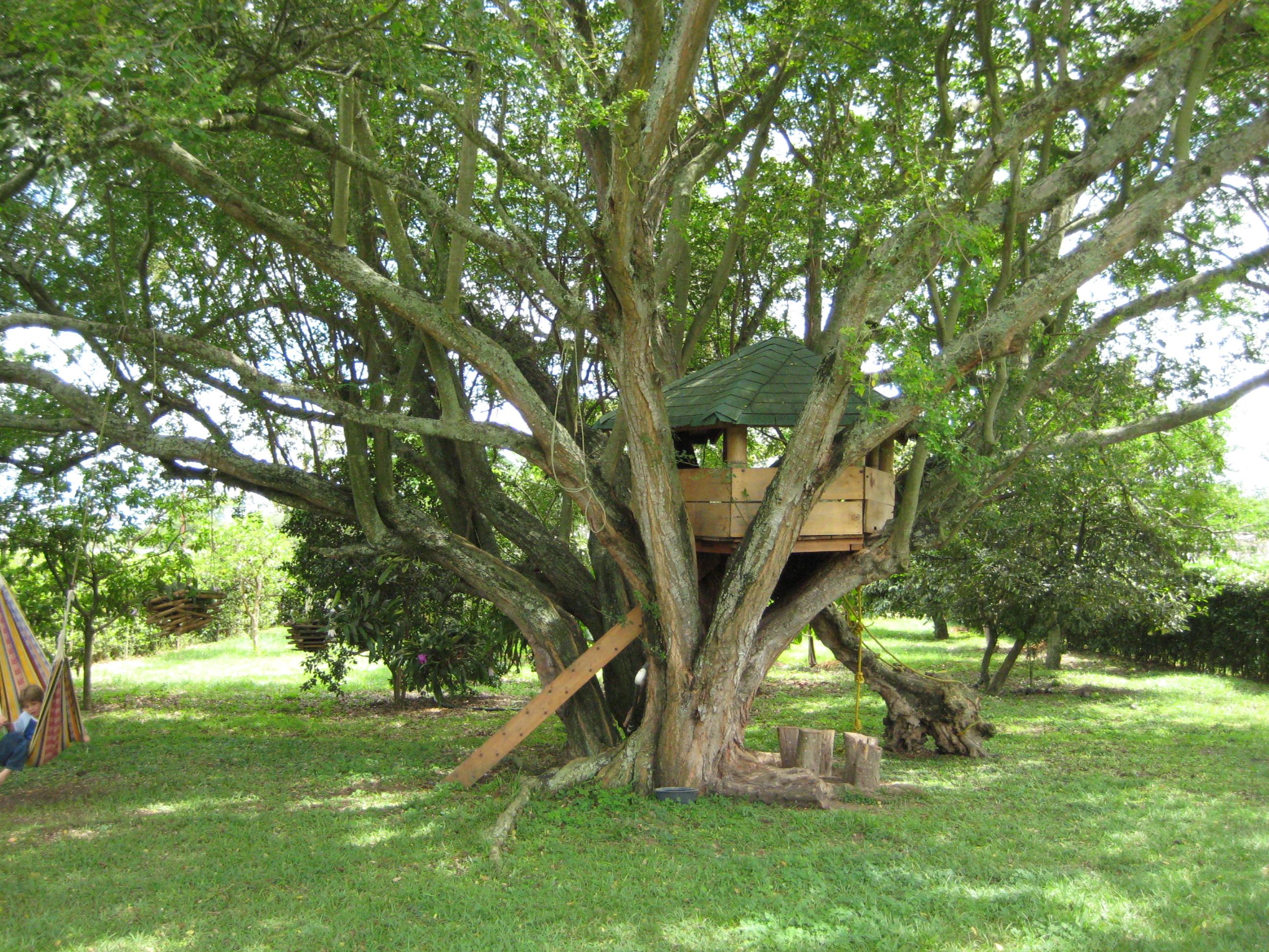 Как сделать домик на дереве своими руками 10 лет фото 27