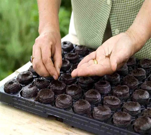 Как правильно сажать рассаду виолы пошагово