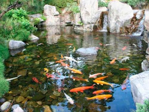 Рыба на даче своими руками