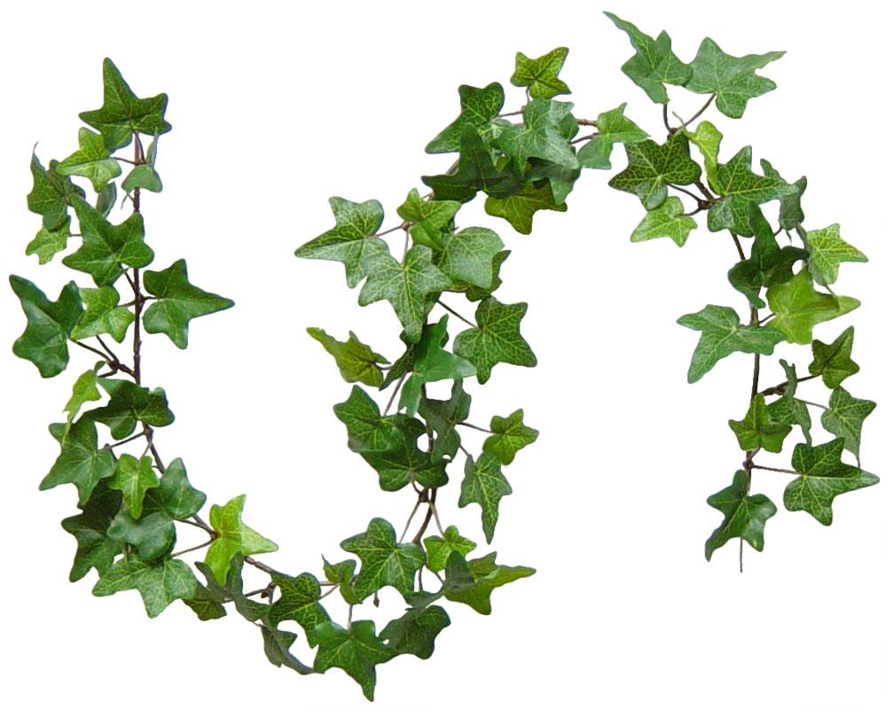 Многолетние лианы для сада: виды, посадка и уход. Виды лиан ...