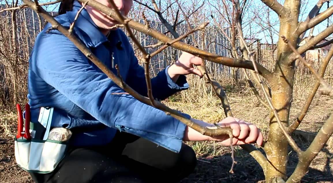 Как сделать из дерево обрезка 573