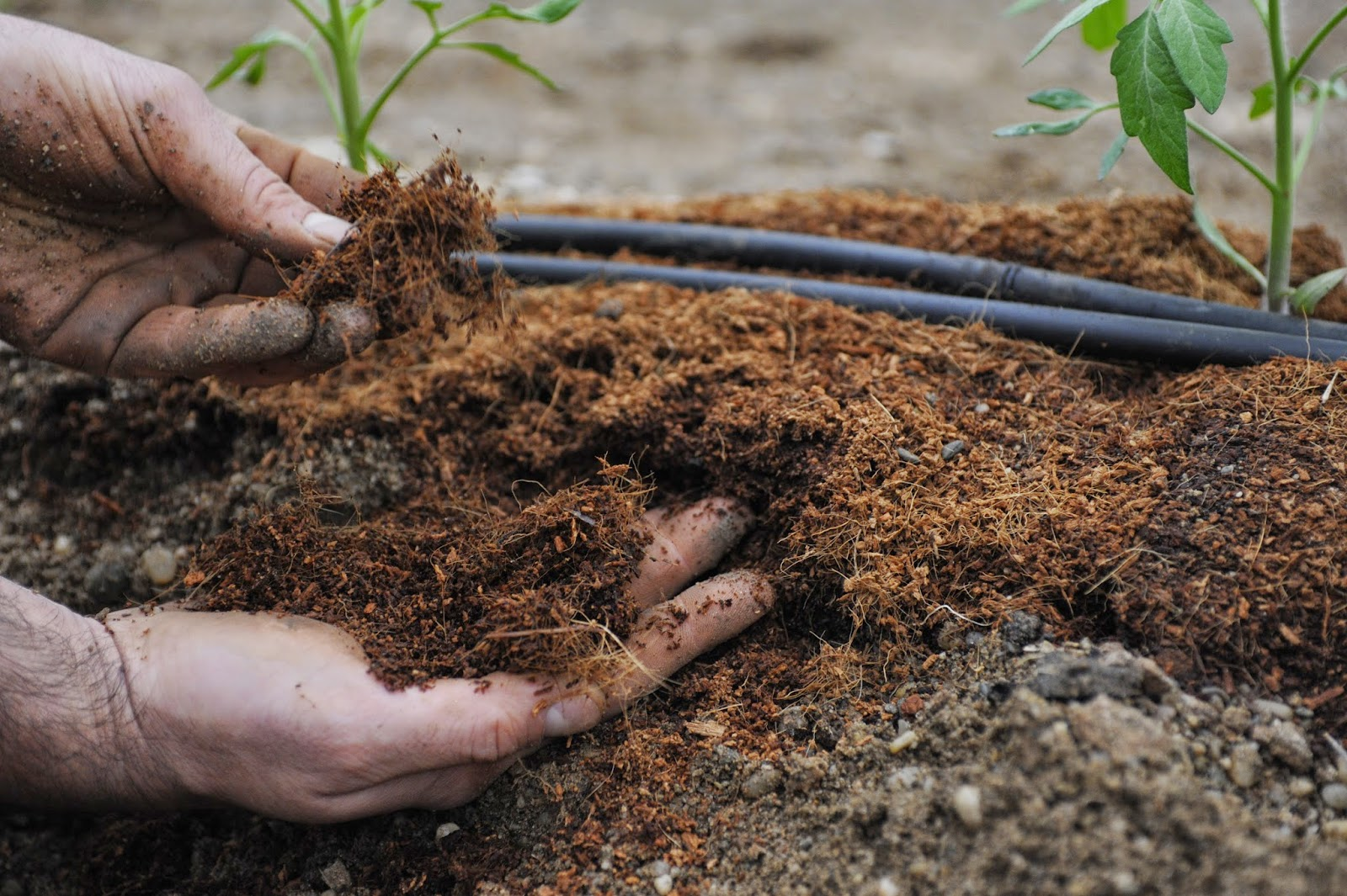 Чем удобрять рассаду помидор в домашних условиях народными средствами