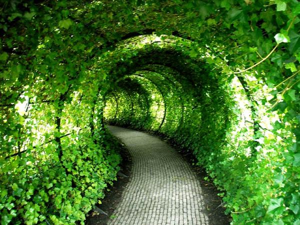 Зеленый сад фото