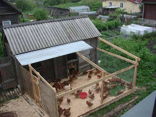 Как построить сарай для кур несушек своими руками? - Greenologia 79