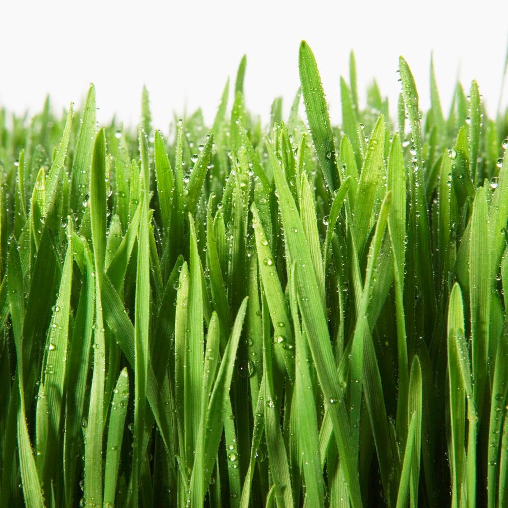 Картинки зеленая трава для детей, днем